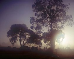 Morning Mist at Penola